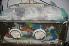 A new-born baby in an incubator in Okhaldhunga Community Hospital.